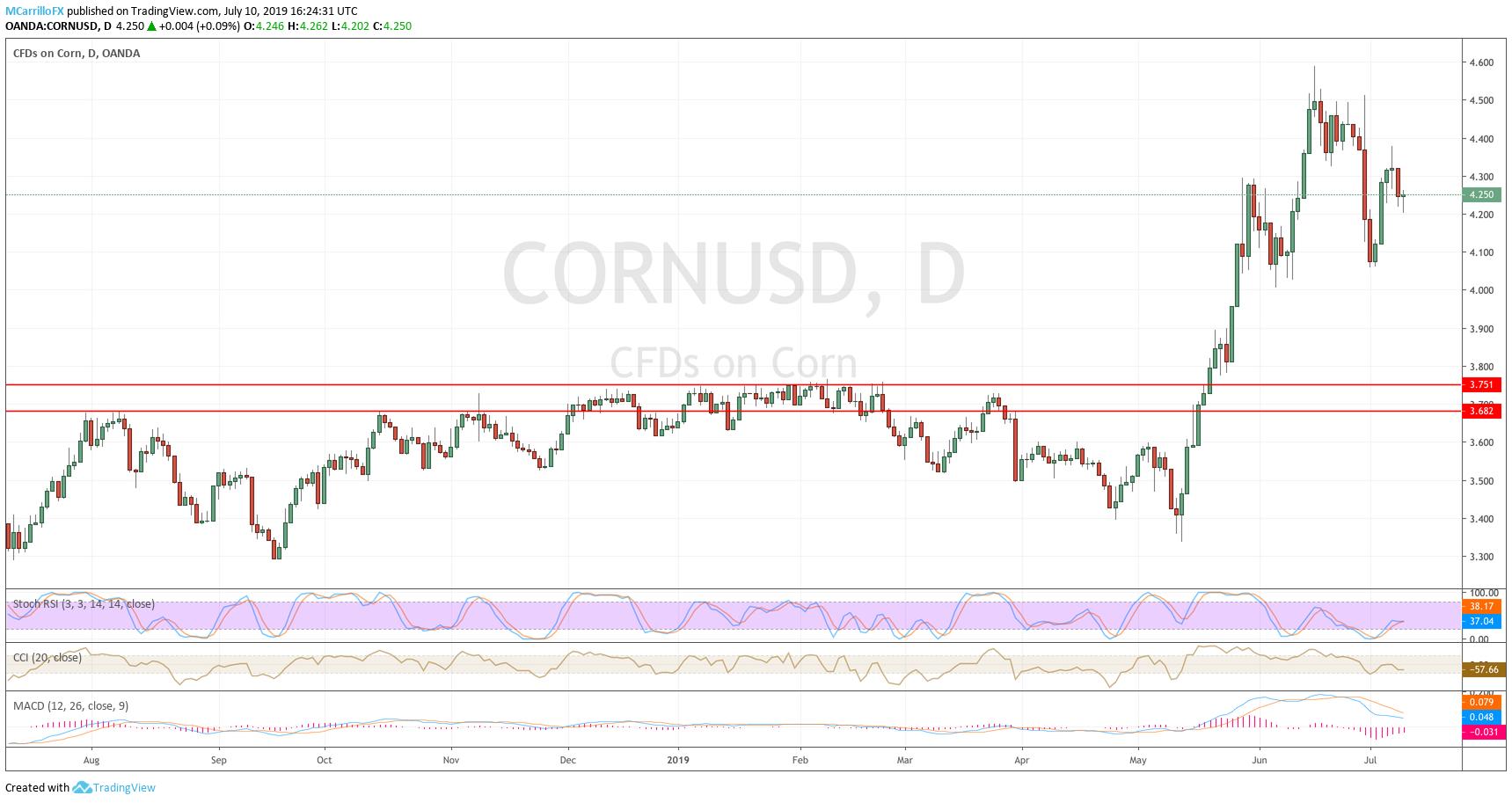 corn daily chart July 10