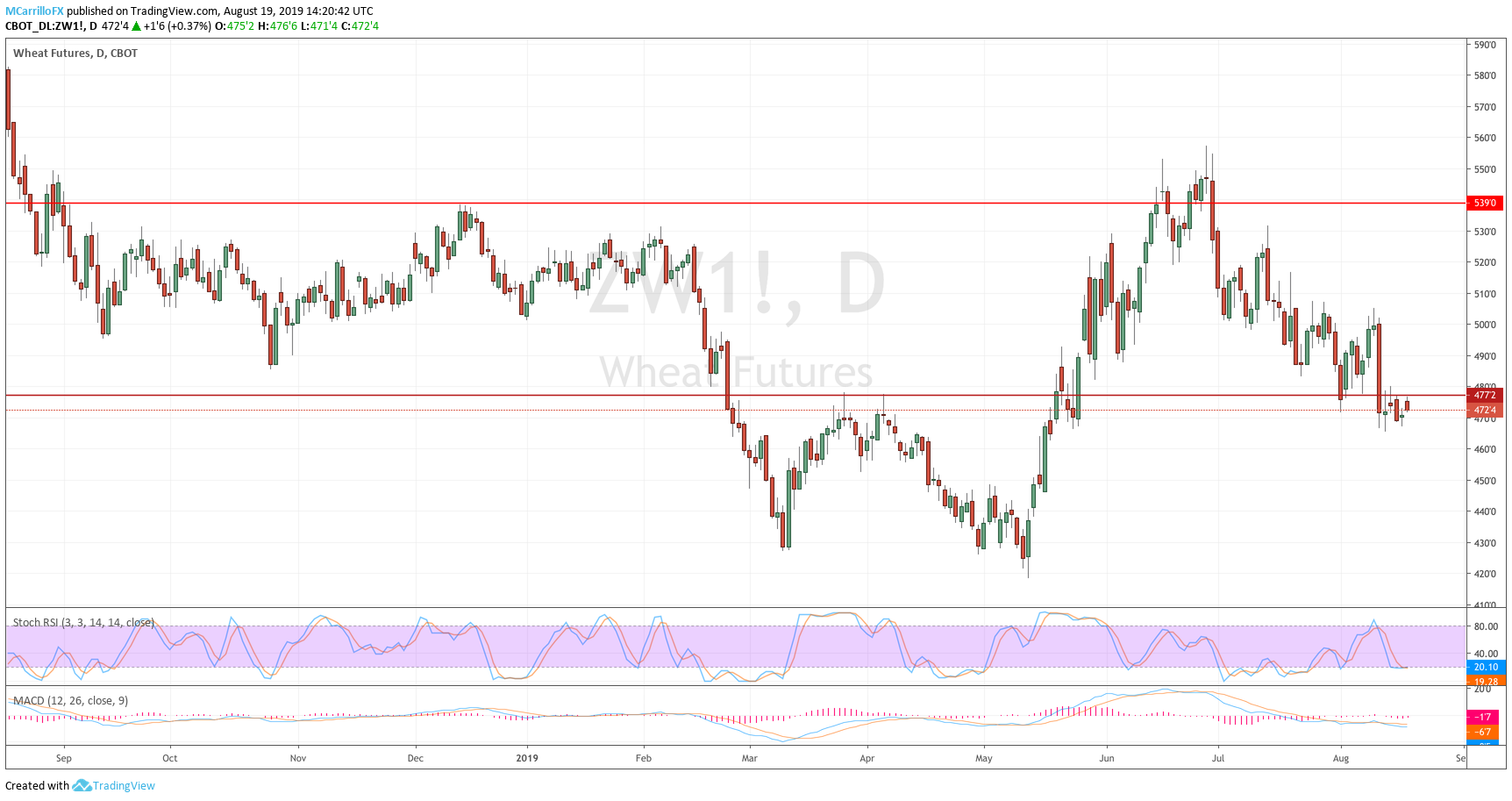 August 19 Wheat daily chart