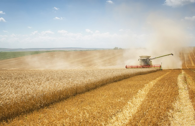 Soybeans, Corn, Recovers Ground on Improved Crop Rate and Trade War