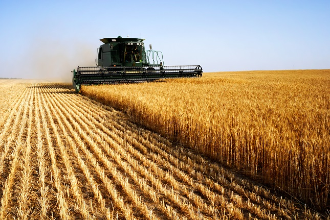 Soybeans Extend Gains, Wheat Down but Signaling a Bullish Recovery