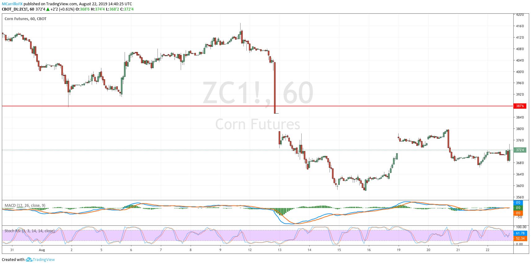ZC1 Corn Future 1-hour chart August 22