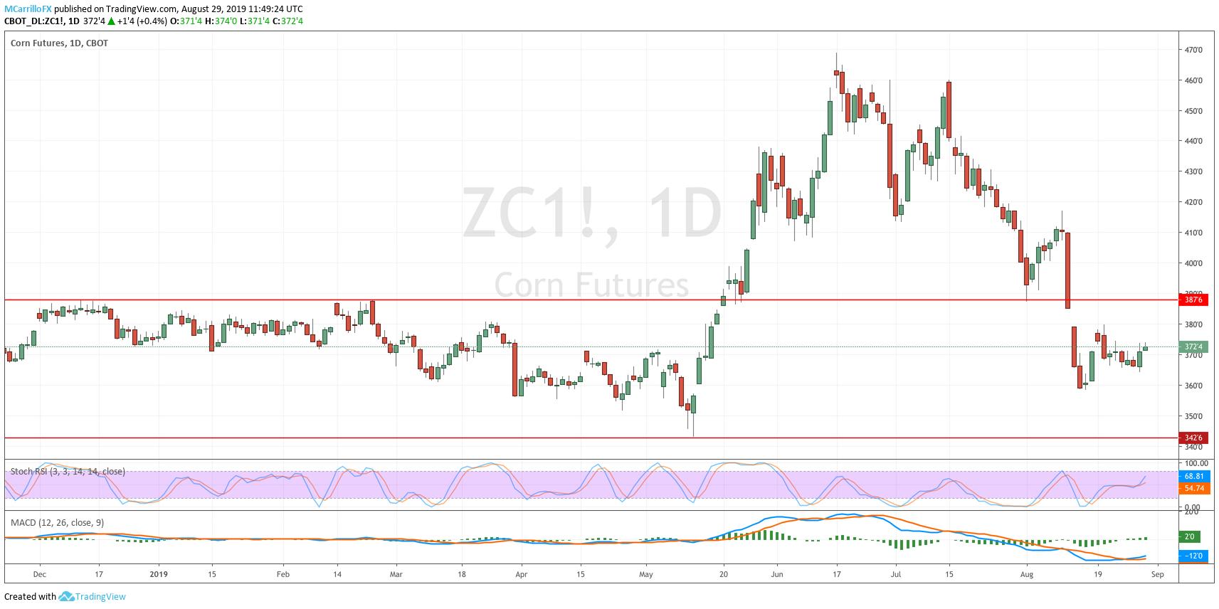 ZC1 Corn Futures 1-hour chart August 29