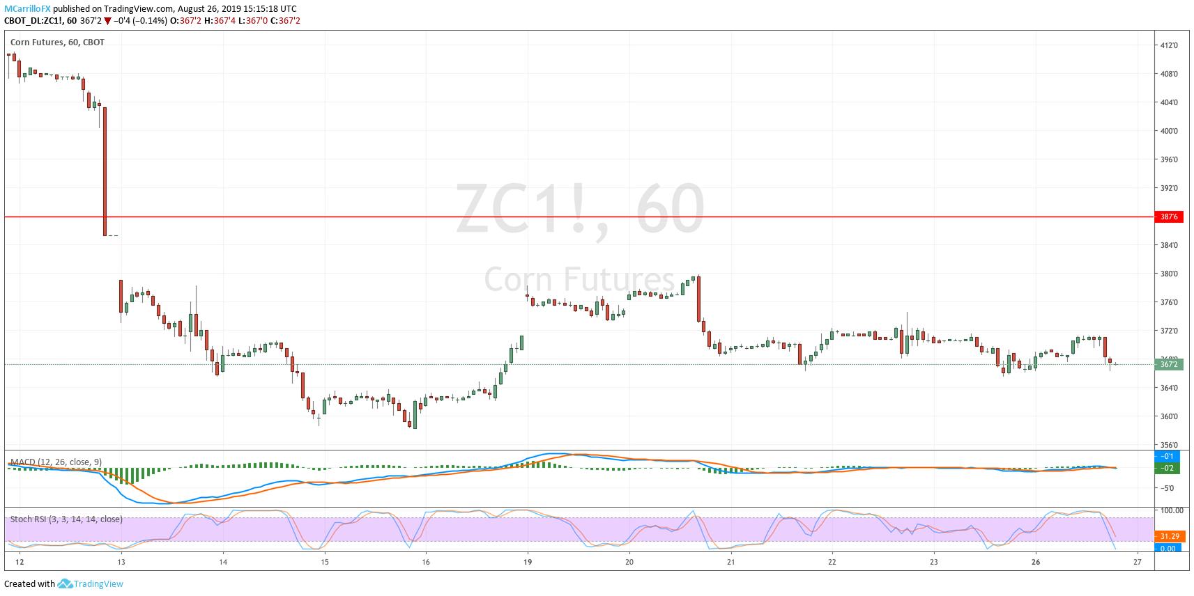 ZC1 Futures Corn 1-hour chart August 26