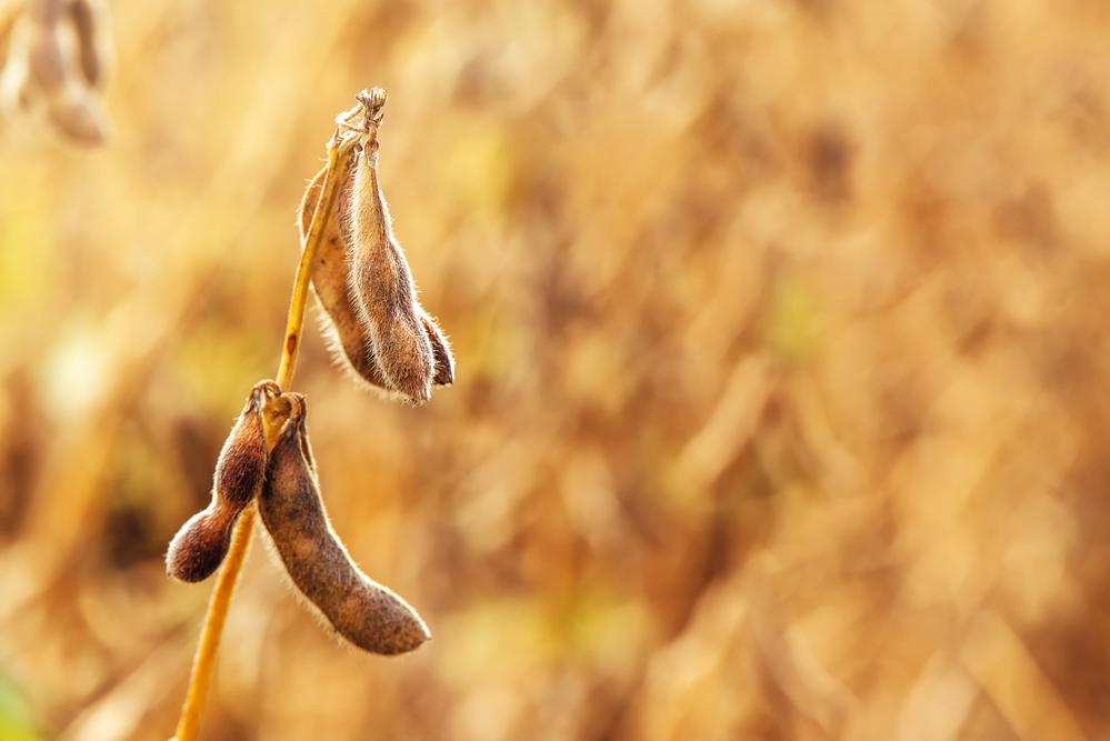Surprising Soybean Oil Export Numbers